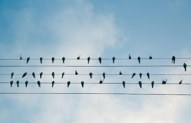 energies renouvelables oiseaux