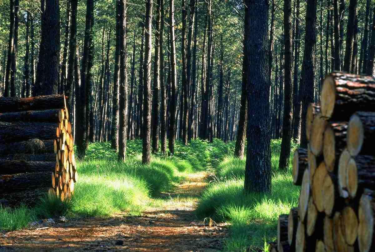 L'utilisation du bois dans notre quotidien pour réduire notre impact environnemental